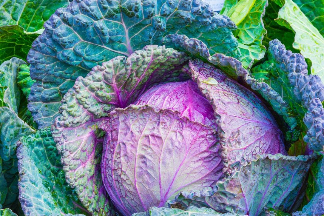 cabbage-1078163_1920.jpg